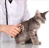Ветеринарные клиники в Неверкино